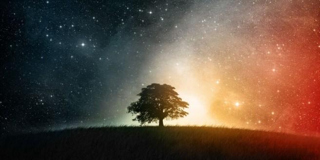 Boom in het universum